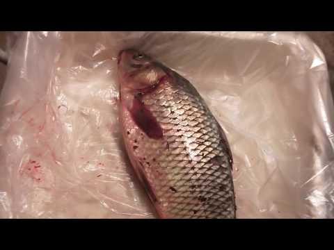 A correct way to clean a carp