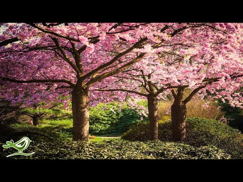 Beautiful Relaxing Music: Japanese Music, Chinese Music, Rom