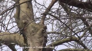 Saint Quentin en Yvelines du 5 Mars 2014