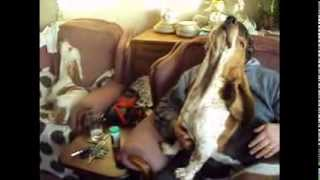 Get Basset Hound Training Tips At Dogproducts.petproductsonline.info | Buy Usa!