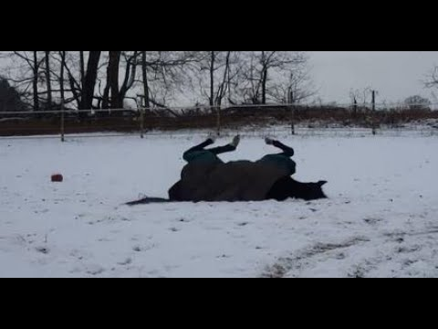 rescue-horse-bella-enjoying-snow-like-a-puppy