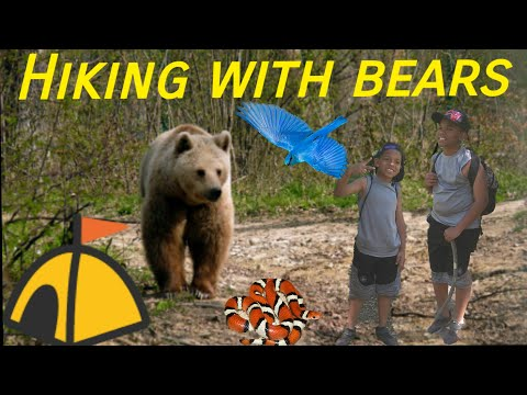 Hiking with Bear's?!?! Millard Falls Angeles national Forest California