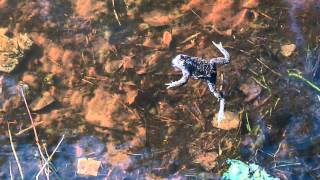 toads and frogs / жабы и лягушки