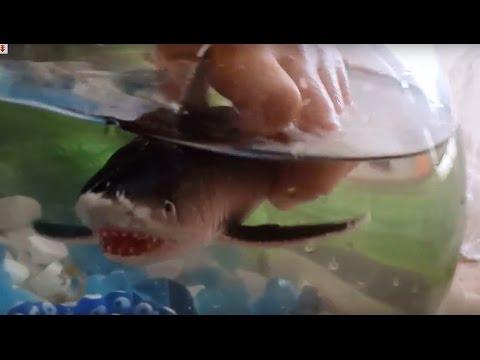 Shark fish tank. Toy sharks. Shark Aquarium