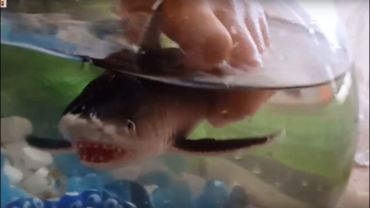 how to clean shark fish