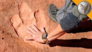 Repeat youtube video Hunting for Dinosaur Tracks!
