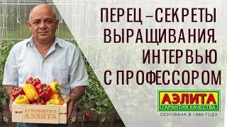 🔥 Перец – Секреты Выращивания. Советы Эксперта