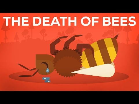 Thumbnail: The Death Of Bees Explained – Parasites, Poison and Humans
