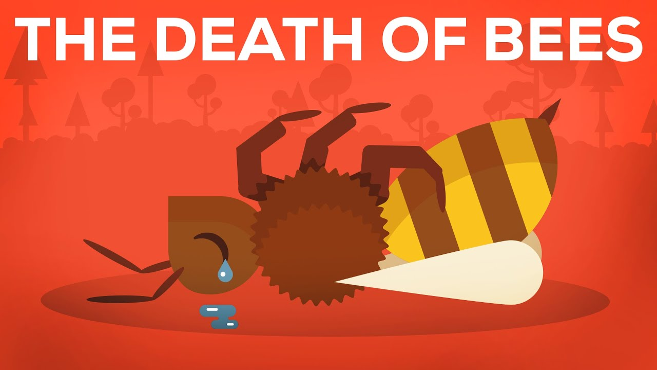What happens if the bees disappear