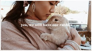 yes-we-still-have-the-rabbits-wahlietv-ep725