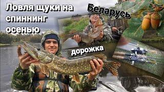 Ловля ЩУКИ на спиннинг осенью Как поймать ЩУКУ осенью на спиннинг Рыбалка в Беларуси 2021 Щука