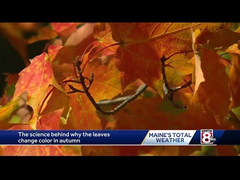 The science behind the beautiful fall colors