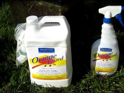 Orange Guard Home Pest Control   YouTube