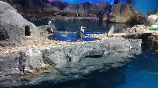 African penguins in Underwater World Langkawi, Malaysia