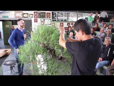 Large pine Bonsai demo by Daisaku Nomoto