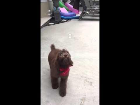 Dog Eats Magical Flying Orbs