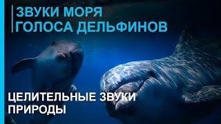 Звуки моря - шум волн ☯ Голоса дельфинов - Дао моря  ☯ Лучшая Музыка Души для отдыха ॐ