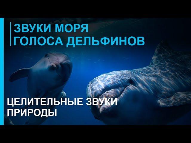 Звуки природы дельфины скачать