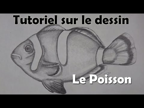 Tutoriel sur le dessin le poisson clown youtube - Dessiner un poisson facilement ...