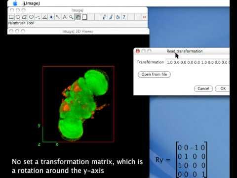 3D Viewer - ImageJ