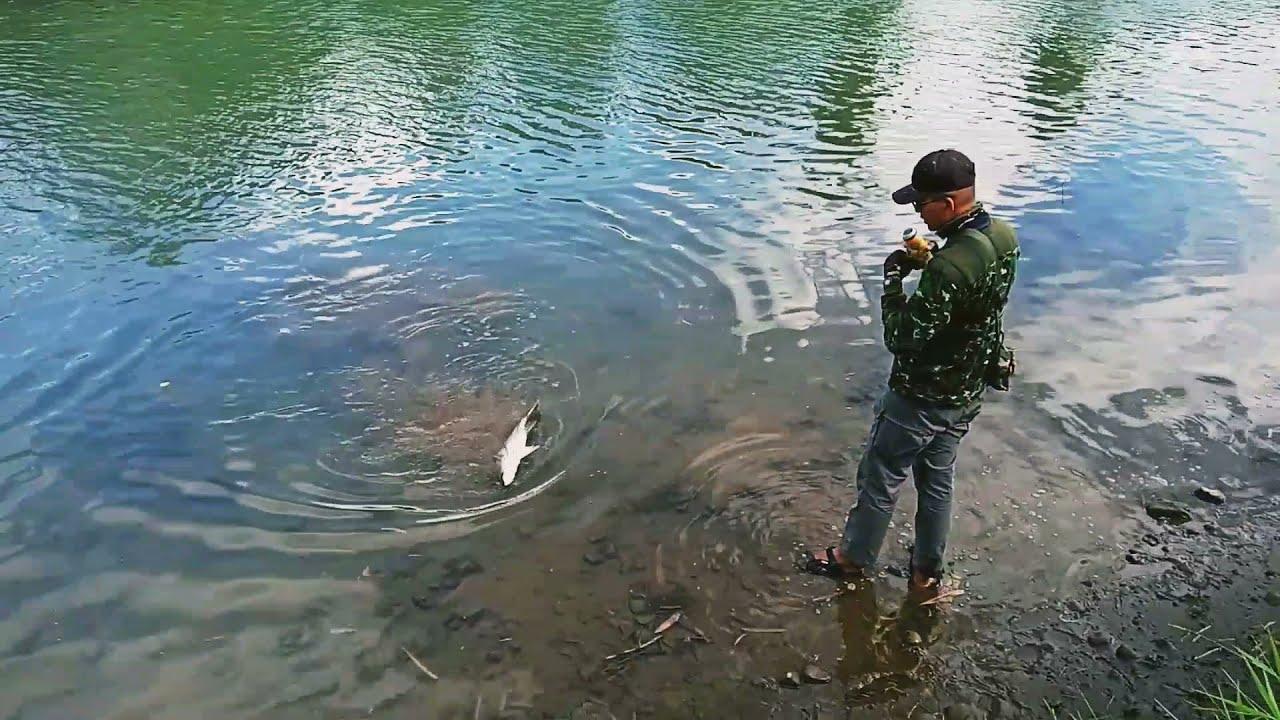 Paser mania Strike ikan kakap putih 5kg mantap - YouTube