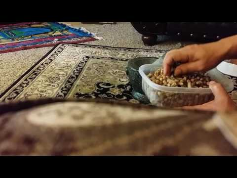 How To Grind Ajwa Dates  Seeds