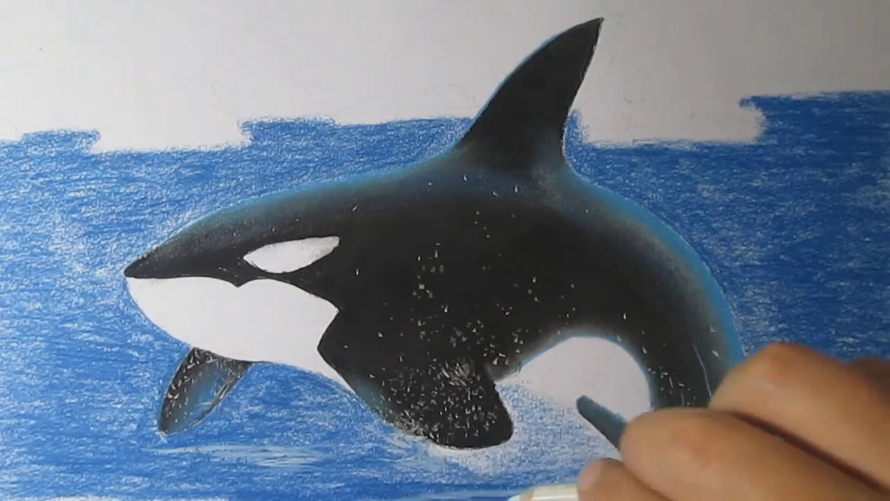 killer whale how to draw