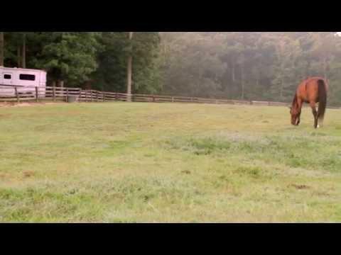Forages & Pasture Management for Horses