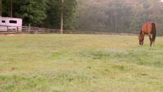 Forages & Pasture Management for Horses