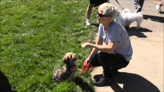 Training Your Dog Not To Bark At People -  The Pooch Coach