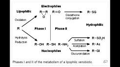 Drug Metabolism - Phase I and Phase 2