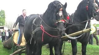 Caii lui Soricelul Cea mai frumoasa pereche de negrii. Gilau 2014