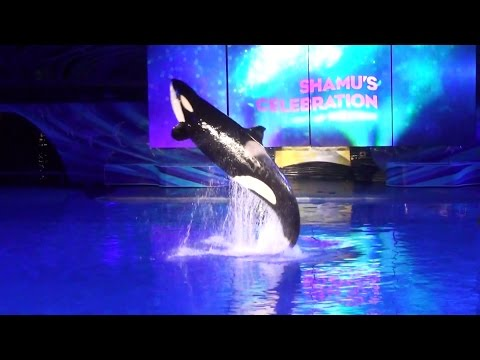 Light Up the Night Full Show - SeaWorld Orlando | Reserved Seating