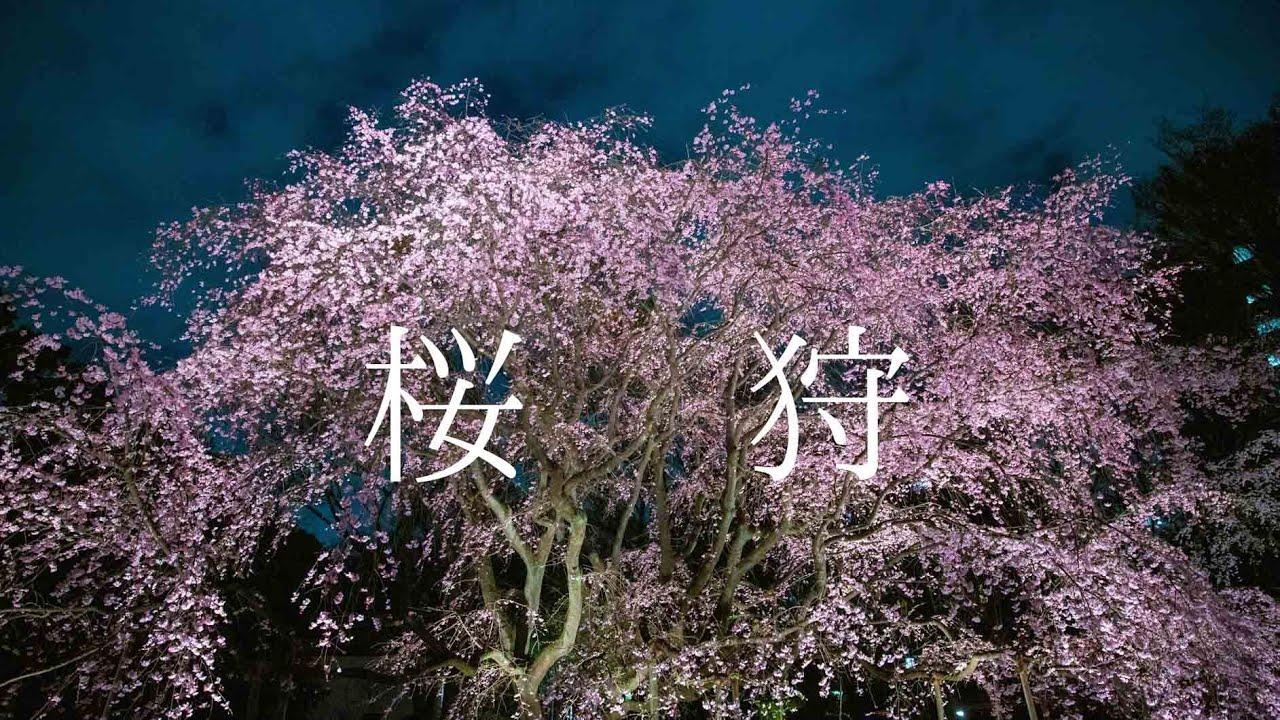 桜狩〜YOZAKURA〜