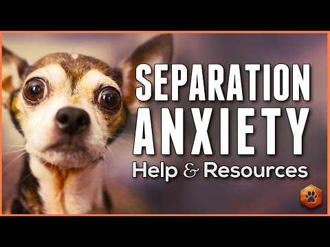 Separation Anxiety in Dogs - Tips, Resources, and Help
