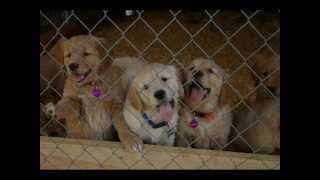 Sunstone Service Dogs Kennel Project