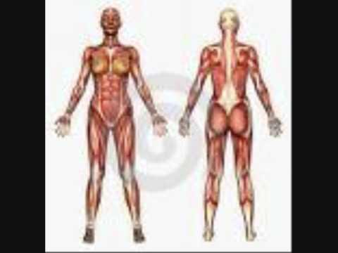 Der Menschliche Körper - YouTube