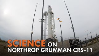 Scientific Investigations Set for Space on NG CRS-11
