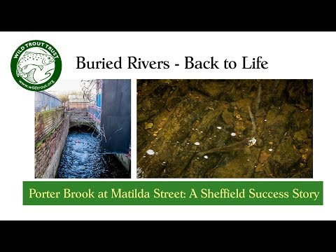 Buried River - Back to Life (a Sheffield Success Story)