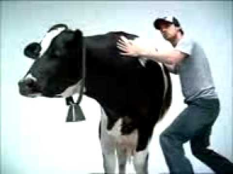 original cow shake commercial youtube