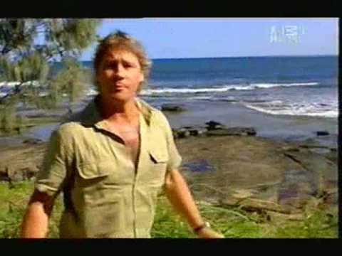 Crocodile Hunter - Tiger Sharks (Part 1/5)