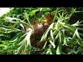 Cultivo y cuidado de los Cuernos o Helechos - TvAgro por Juan Gonzalo Angel