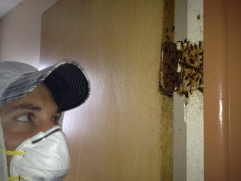 Exterminating German Roaches Tampa Fl