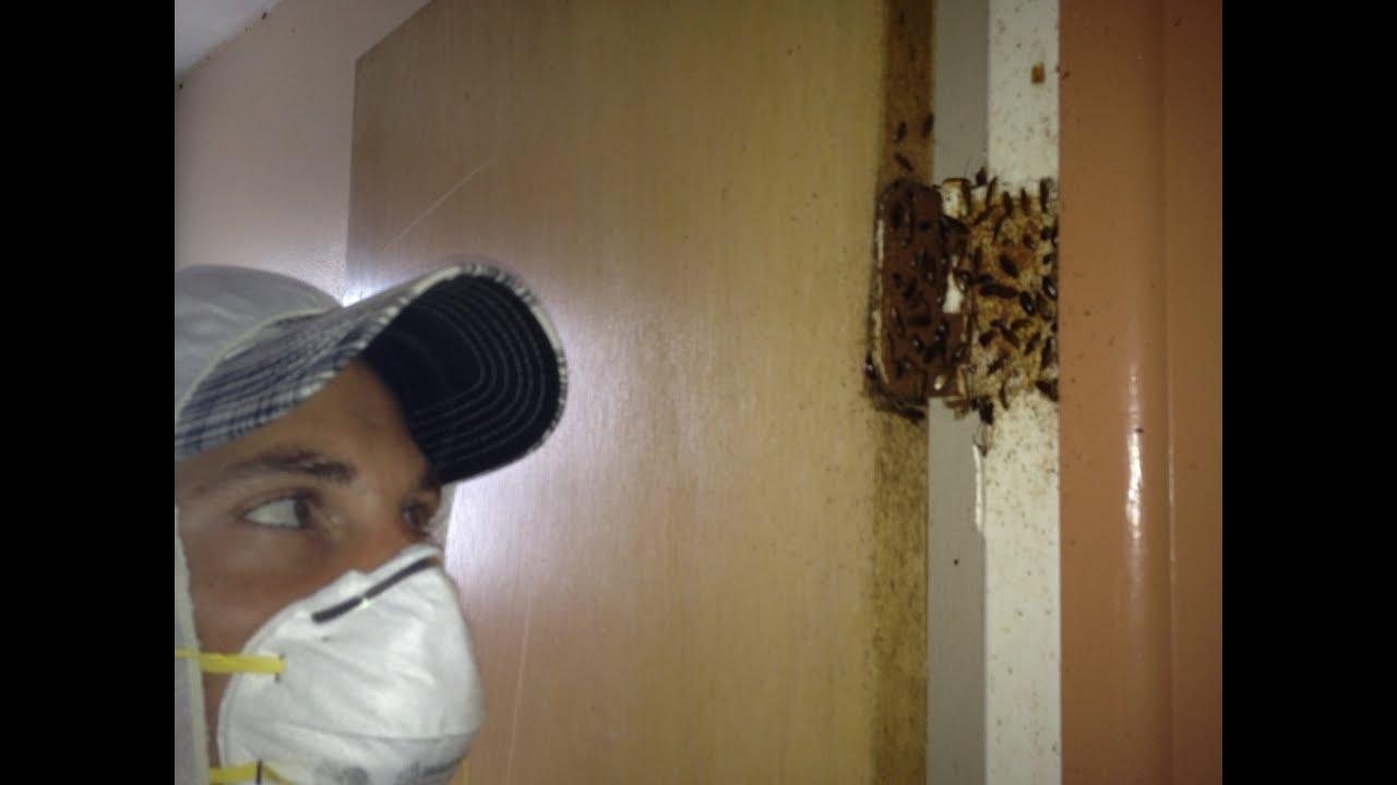 exterminating german roaches tampa fl youtube