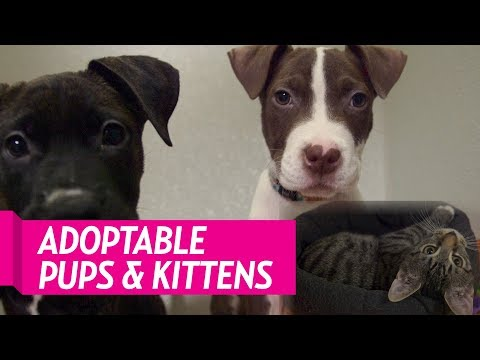 These Puppies and Kittens Could Be Your Fur-Ever Friend