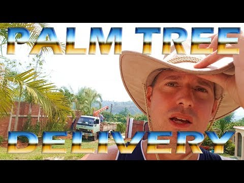 Palm Tree Delivery - My Home in Thailand - Garden Update
