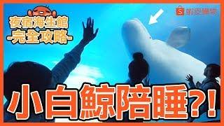 【夜宿海生館】挑戰睡海底隧道!超越五星飯店的體驗?蝦皮x屏 ...