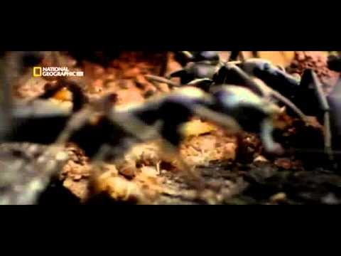 Ga'Hoole: La Leyenda de los Guardianes - Trailer 2 Español Latino - FULL HD from YouTube · Duration:  2 minutes 33 seconds