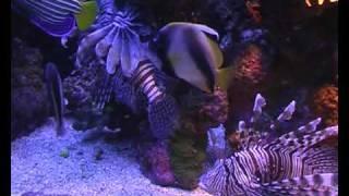 Аквариумные рыбки красного моря - Эйлатский аквариум