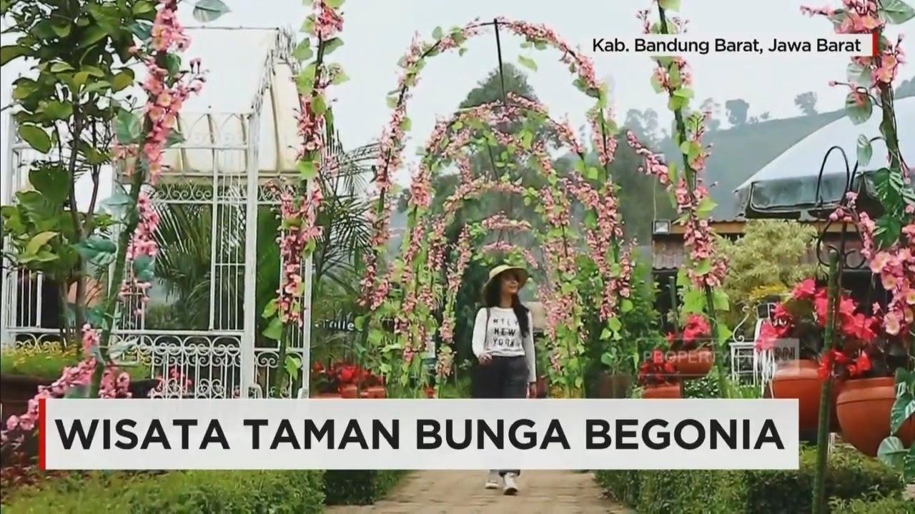 Wisata Taman Bunga Begonia Youtube
